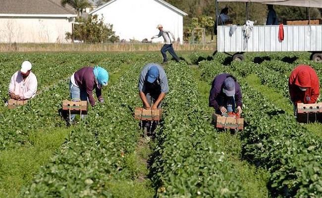 lavoratori agricoli seminano ortaggi
